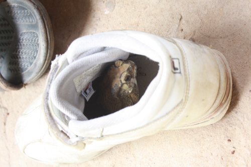 Miji's sneaker becomes a hotel of a toad :lol: